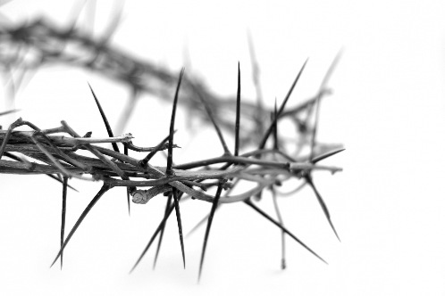 stockxpertcom_id945311_size2 crown of thorns2